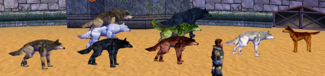 wolfies